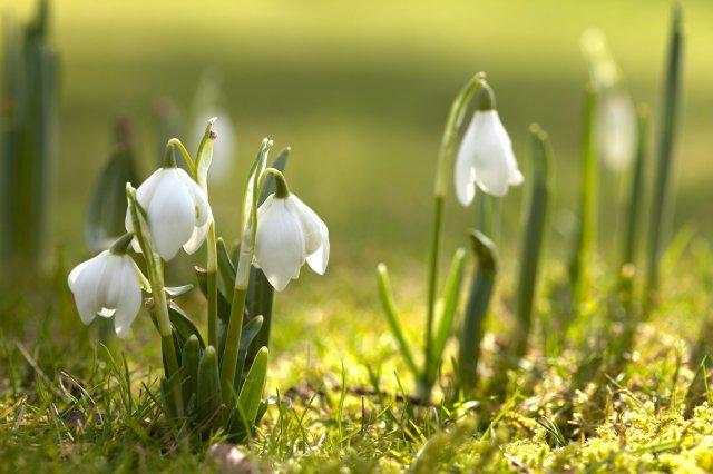 Free-spring.jpg