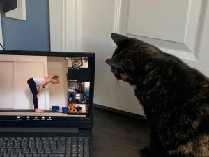 cat watching laptop video of yoga teacher leading class online